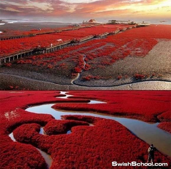 صور اغرب شاطئ في العالم