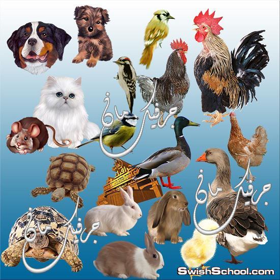 صور جرافيك مفرغه ابقار وجمال ودجاج وبط png - حيوانات اليفه للتصميم وللدعايه والاعلان
