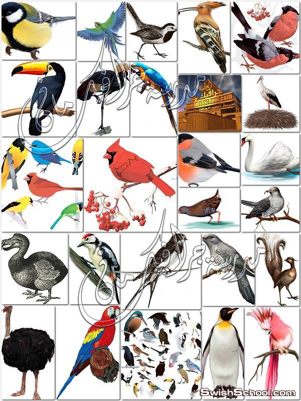 صور طيور منوعه بصيغه فيكتور eps - فيكتور جرافيك 2014