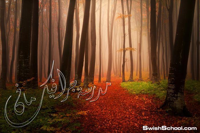ستوك فوتو غابات مظلمه وقت الخريف - خلفيات جرافيك عاليه الجوده للدذاين 2014