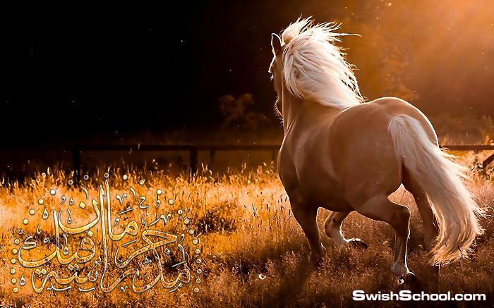 كولكشن خلفيات الخيول لعشاق الخيل 2014