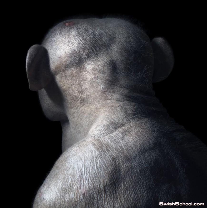 صور مبهرة لحيوانات تظهر ايماءات وتعابير وجه مماثلة للانسان