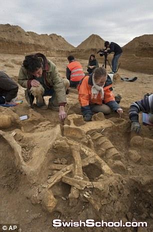 اكتشاف هيكل عظمي لحيوان الماموث الضخم في فرنسا