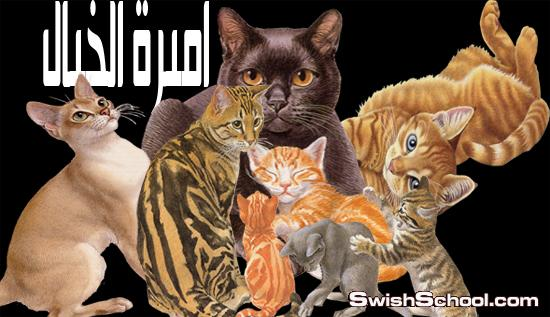 صور قطط مقصوصه عاليه الجوده