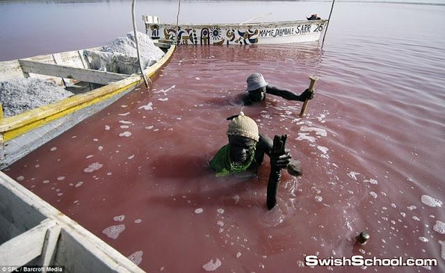 صور البحيره الورديه
