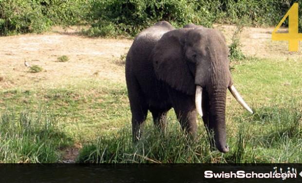 الحيوانات الأكثر ذكاء , صور ومعلومات