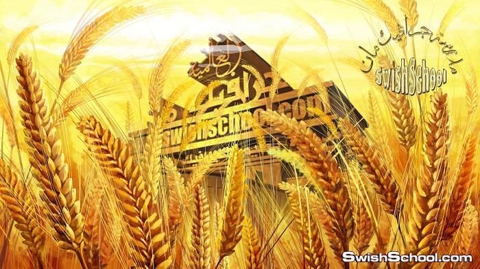 صور مفرغه سنابل القمح الذهبيه لاضافتها على التصاميم png