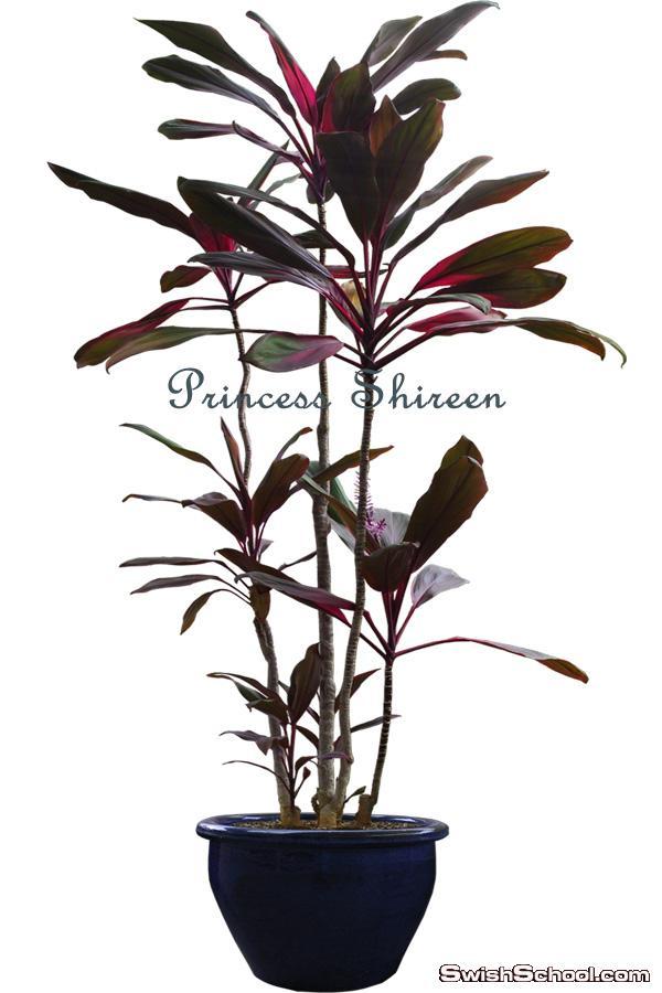 كولكشن سكرابز نباتات زينة عالى الجودة حصرى على مدرسة جرافيك مان