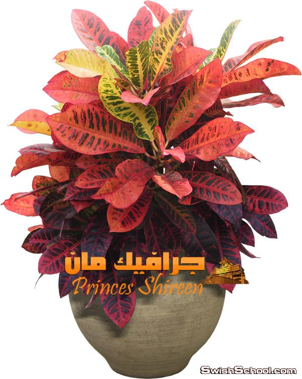 كولكشن سكرابز نباتات زينة عالى الجودة حصرى على مدرسة جرافيك مان الجزء الثالث