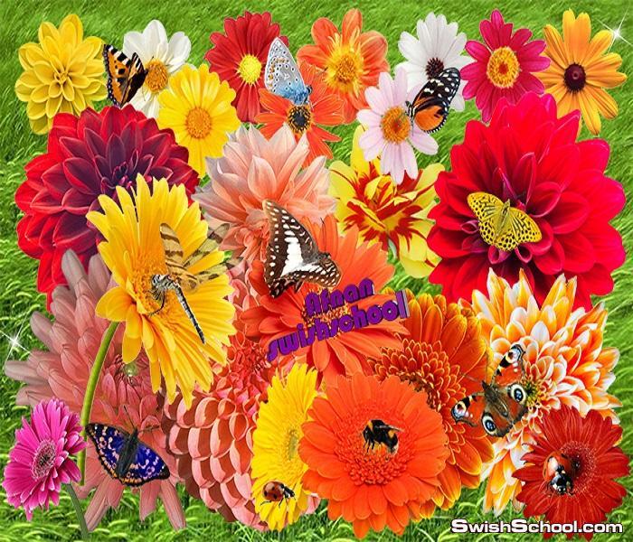 سكرابز ورد وزهور مع فراشات الربيع للتصاميم - ملف مفتوح psd