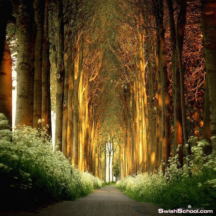 صور ساحرة لأشجار تكونت واتحدت مع بعضها البعض لتصبح على شكل أنفاق