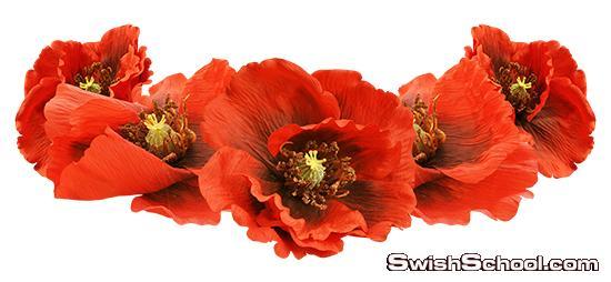 سكرابز زهور حمراء واعشاب وفريمات مزينه بالزهور بدون خلفيه png