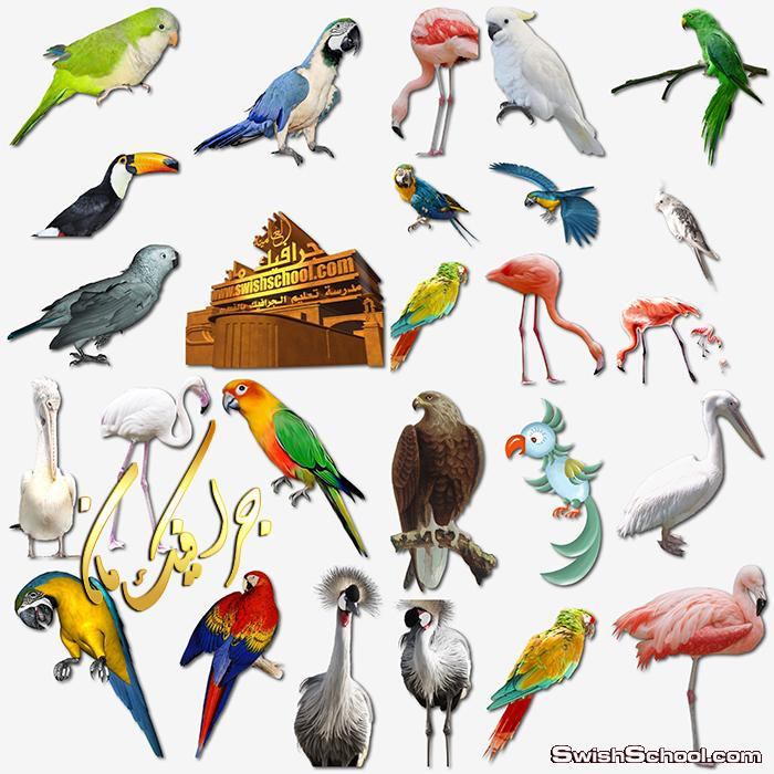 كولكشن طيور منوع لتصاميم الفوتوشوب png