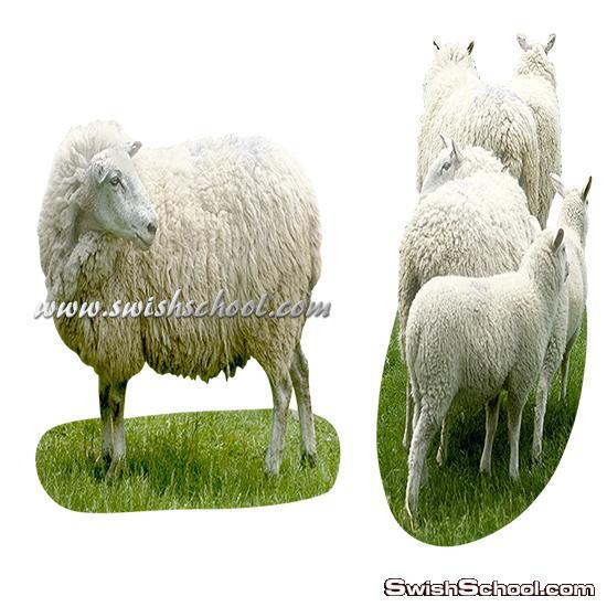 صور خروف العيد بدون خلفيه عاليه الجوده png