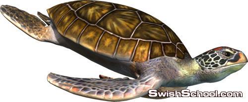 سكرابز اسماك - صور مقصوصه سمك وكائنات بحريه png