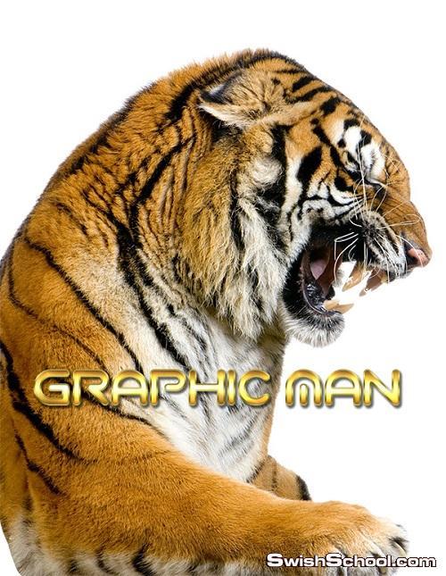 صور نمور وفهود مفرغه png - سكرابز نمور واسود - حيوانات متوحشه للتصميم