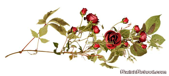 سكرابز ورد وزهور وفريمات فاخره عاليه الجوده بدون خلفيه png - اكاليل الزهور واكسسورات فخمه لاستديوهات التصوير