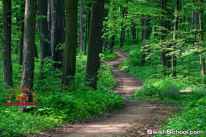 خلفيات جرافيك غابات وطبيعه خلابه عاليه الدقه للتصميم jpg