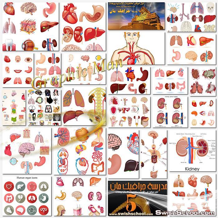 فيكتور جرافيك اجزاء الجسم البشريه لتصاميم الطلبه والمعلمين عالي الجوده eps ,jpg - خلفيات طبيه