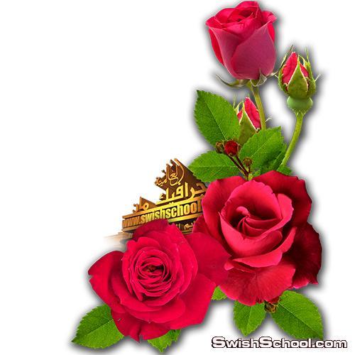 سكرابز زوايا واركان زهور عاليه الجوده بدون خلفيه لتزين التصاميم png - مرفقات فوتوشوب