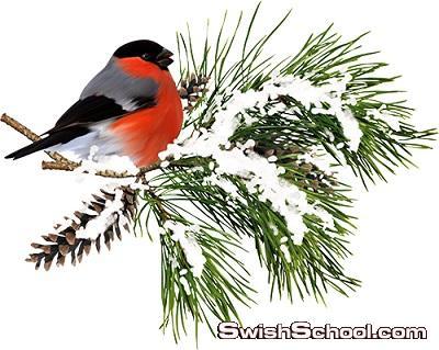 سكرابز عصافير فصل الشتاء بدون خلفيه لتصاميم الفوتوشوب png