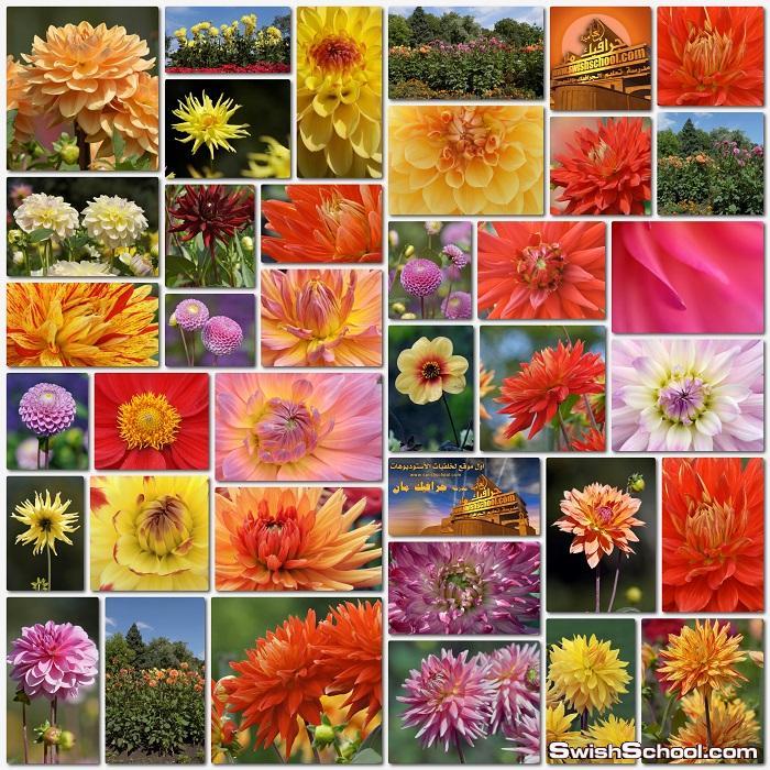 صور ورد وزهور منوعه لسطح المكتب jpg