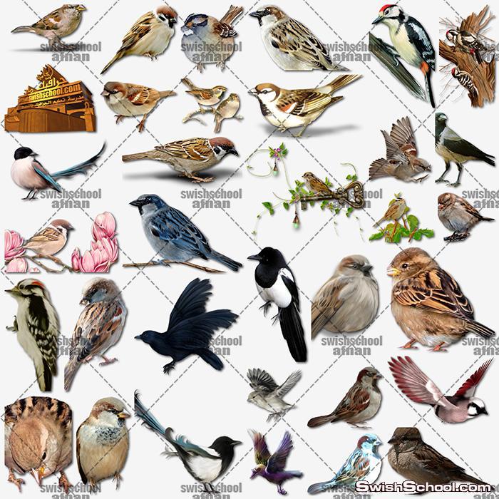 اجمل واحدث سكرابز عصافير وطيور منوعه لتصاميم الفوتوشوب png