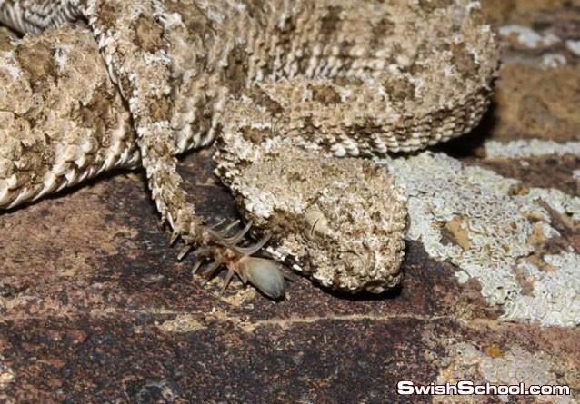 صور الثعابين الاغرب في العالم