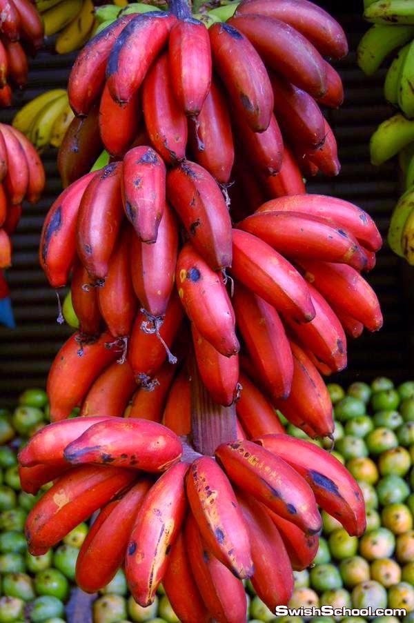 صور ومعلومات عن الموز الاحمر