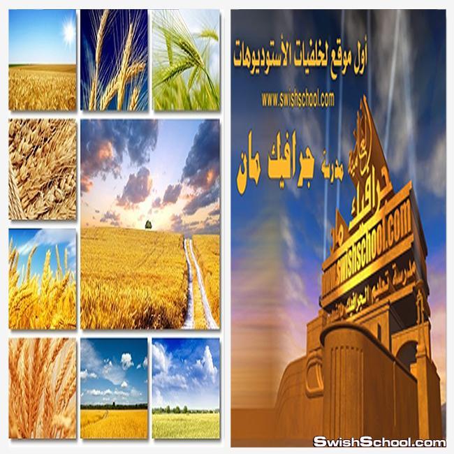 خلفيات حقول القمح الجميلة