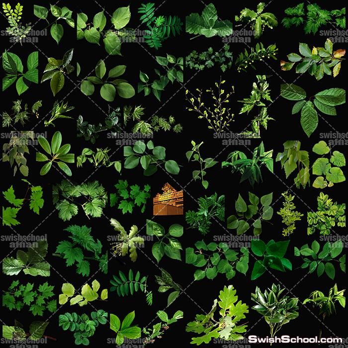 صور مقصوصه ورق شجر ونباتات خضراء بدون خلفيه لتصاميم الفوتوشوب png