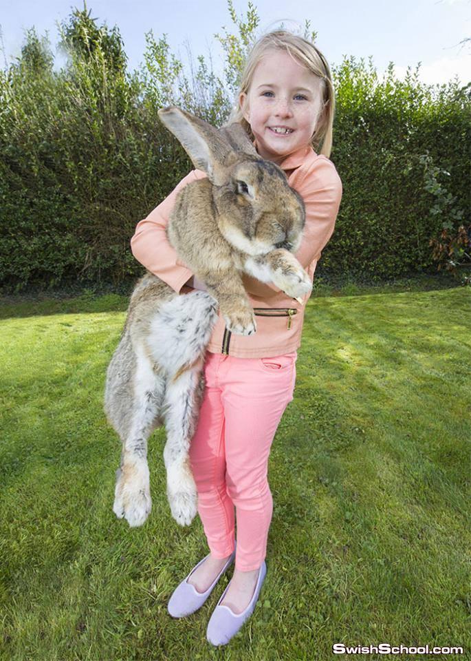 صور اكبر ارنب في العالم هو وابنه ^_^