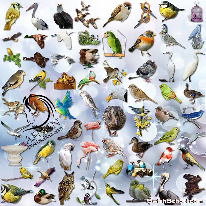 صور طيور منوعه وصقور وعصافير بدون خلفيه لتصاميم الفوتوشوب png