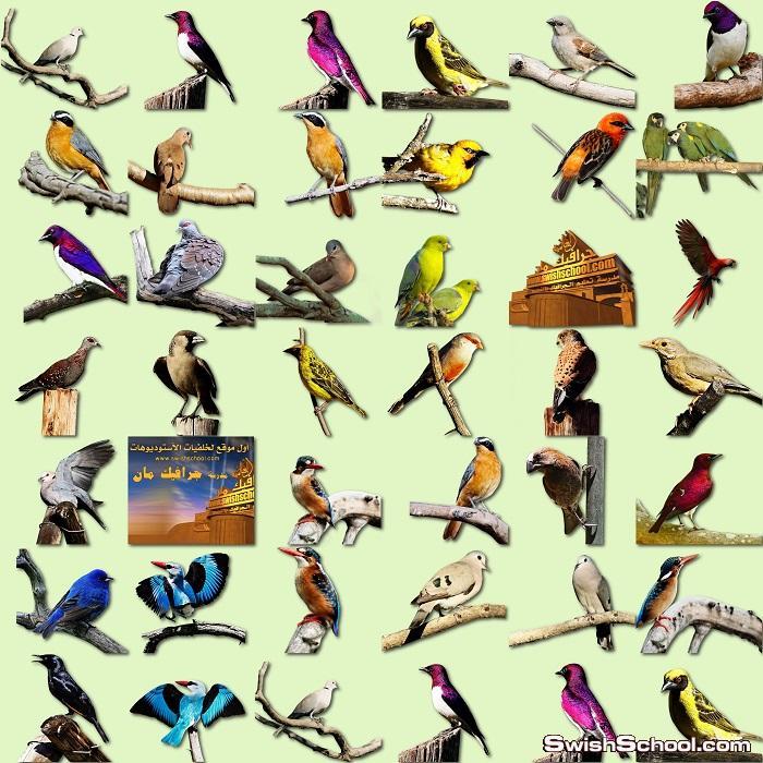 طيور منوعه على غصون الاشجارpng..مجهود شخصي وحصري على مدرسة جرافيك مان
