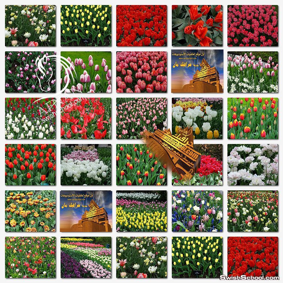 تحميل اجمل صور الورد والزهور عاليه الدقه لتصاميم الفوتوشوب والاستديوهات jpg