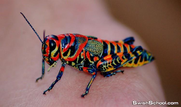 شاهد وتأمل حيوانات رائعه بالوان مدهشه