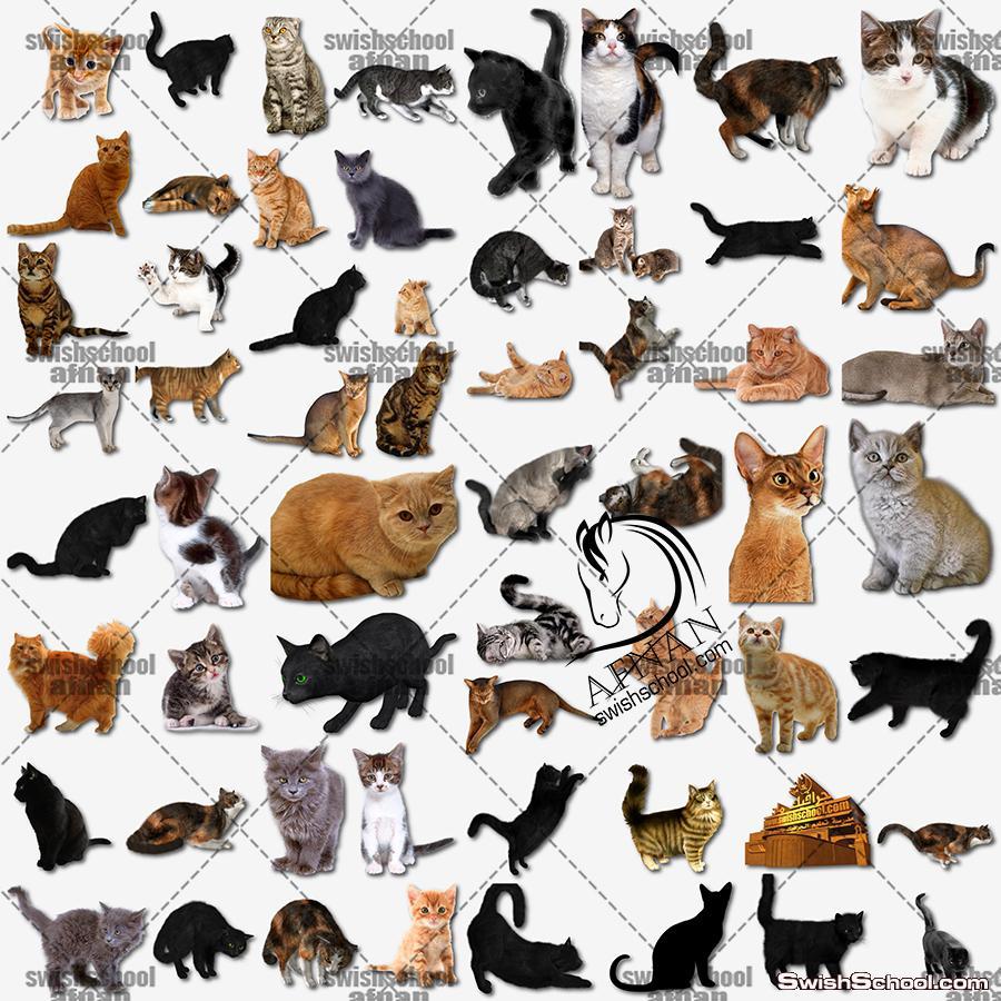 تحميل صور قطط بدون خلفيه لتصاميم الفوتوشوب png