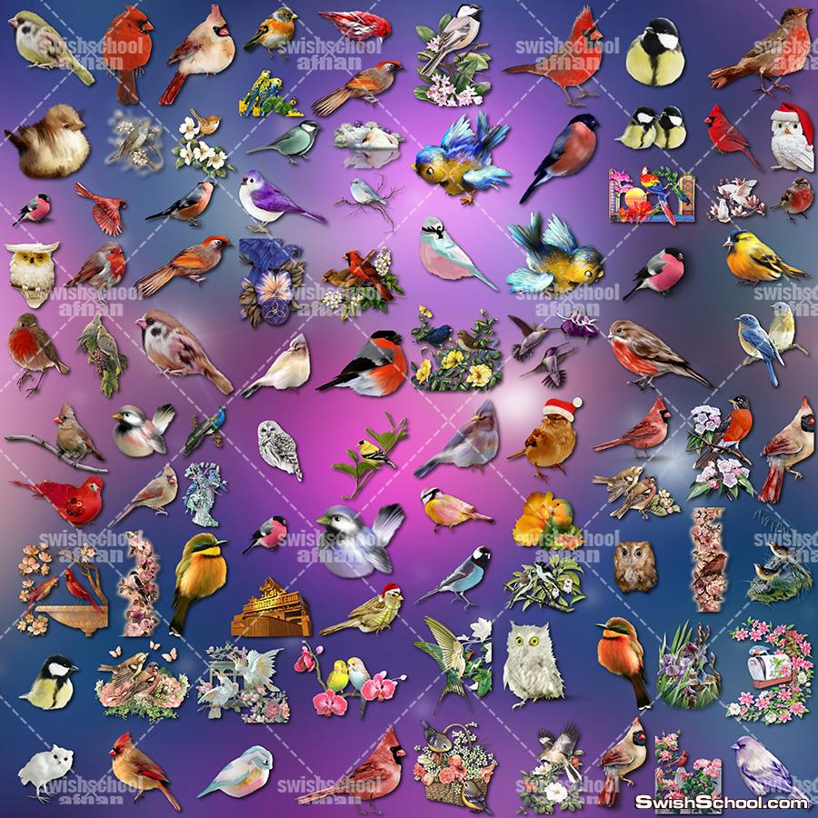 صور طيور وعصافير زينه مفرغه لتزين التصاميم png