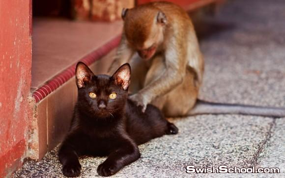 دقه التصوير - صور حيوانات التقطت في الوقت المناسب - صور حيوانات طريفه