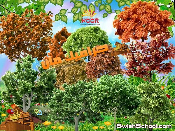 صور اشجار ونخيل بخلفيه شفافه - نخيل - اشجار صور مقصوصه pngرائعه للتصميم