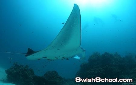 حيوانات اعماق المحيط في خلفيات رائعه