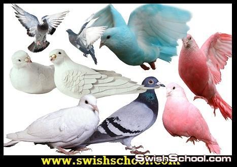 ملفات مفتوحه لطيور وحمام ونسر وطاوس وديوك وبط ووز وبغبغان psd