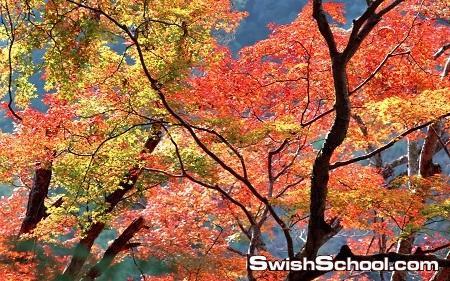 اشجار الخريف في خلفيات Beautiful Autumn Trees