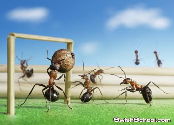 حياة نملة في صور - نمل مدرب يقف امام الكاميرا ويمثل - صور غريبه