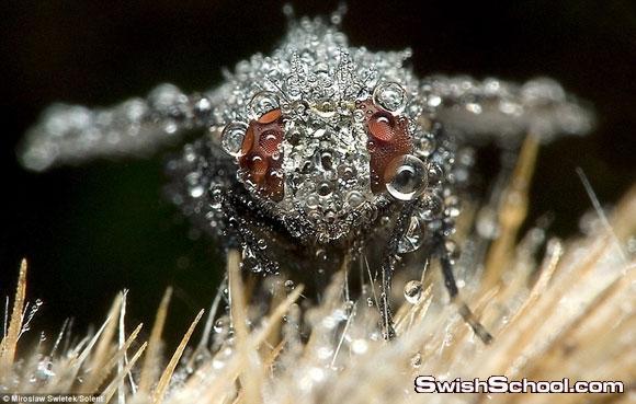 حشرات نائمة مغطاة بقطرات الندى - من عجائب الطبيعه