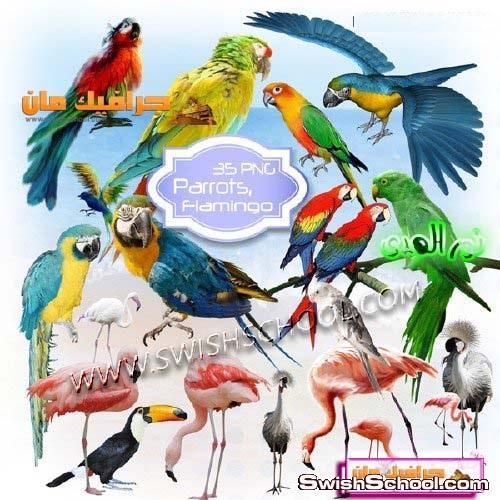 صور مقصوصه بغبغانات - صور طيور الفلامنجو بدون خلفيه - صور طيور مفرغه لتصاميم الفتوشوب 2013