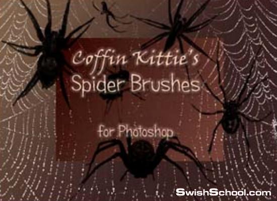 فرش عنكبوت وبيوت العنكبوت