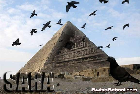 فرش طيور وحمام وغربان واسراب طيور