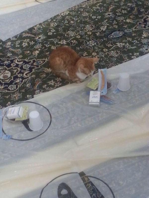 صور قطه تحجز مكاناً لها على موائد الافطار في الحرم المكي