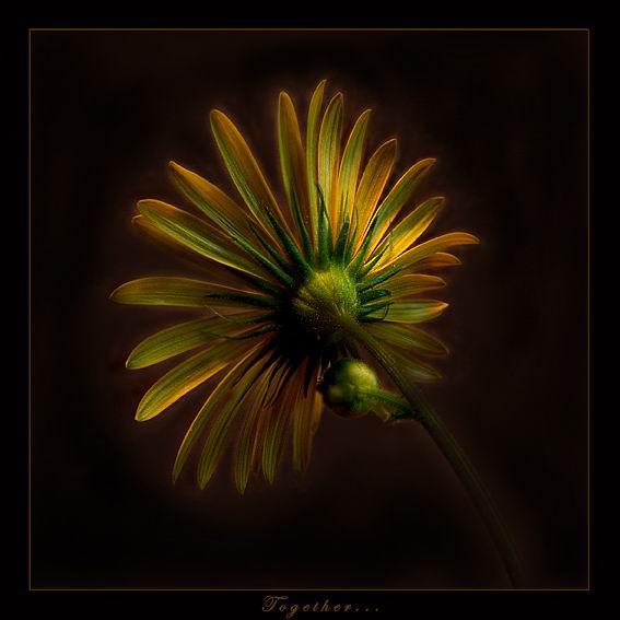صور ورود طبيعيه رومانسيه - زهور رومانتيكيه - باقات ورد